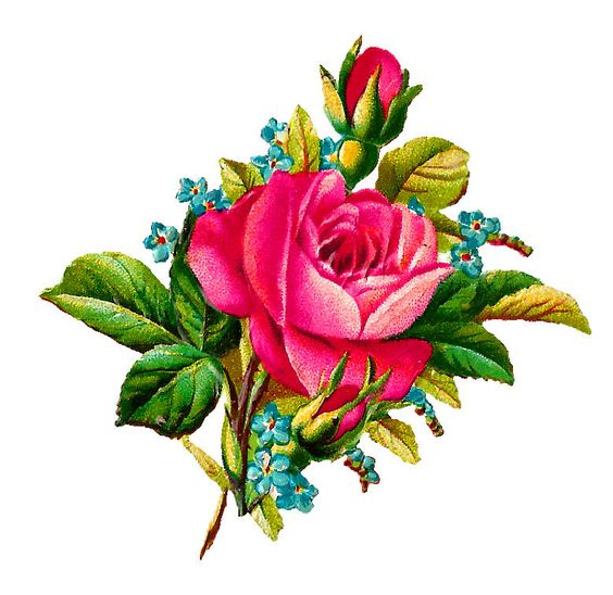 digital pink rose illustration: