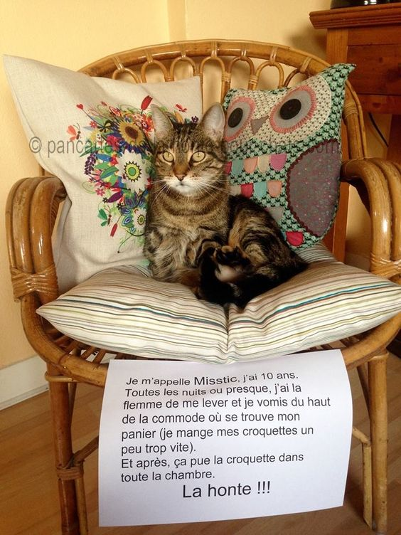 « My name is Misstic, I'm 10 years old. Every almost night, I can't be bothered to stand up, so I vomit on the chest of drawers where is my basket (I eat my croquettes too fast). And after, it stinks the croquette in the room. The shame!! »