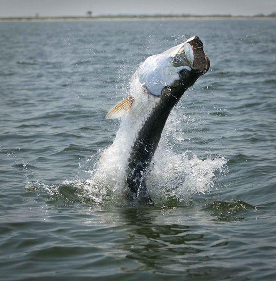 Florida keys florida and fishing on pinterest for Best fishing in florida keys