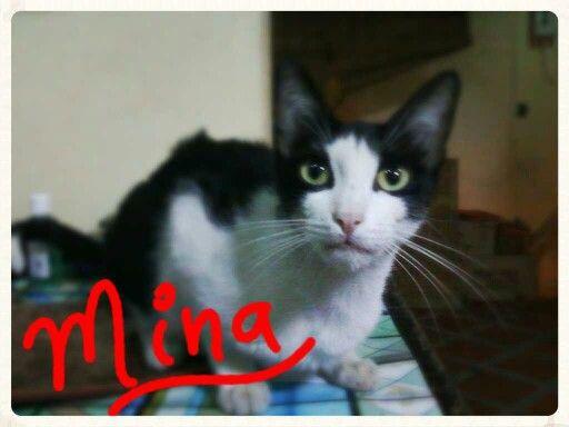 Mina, la gatica de Alex y Delphine.