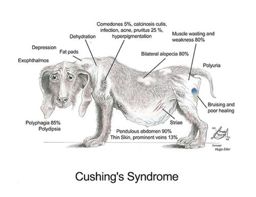 How would you know if your #dog is suffering from #Cushing's Syndrome? Enlighten yourself with the complete guide.