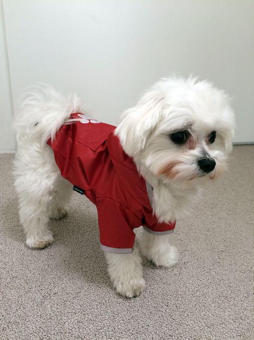 Hundebekleidung Regenmantel Fur Optimalen Regenschutz Der Regenmantel Fur Hunde Mit Kapuze Wasserdichte Fun Regenmantel Hund Hunde Bekleidung Regenmantel