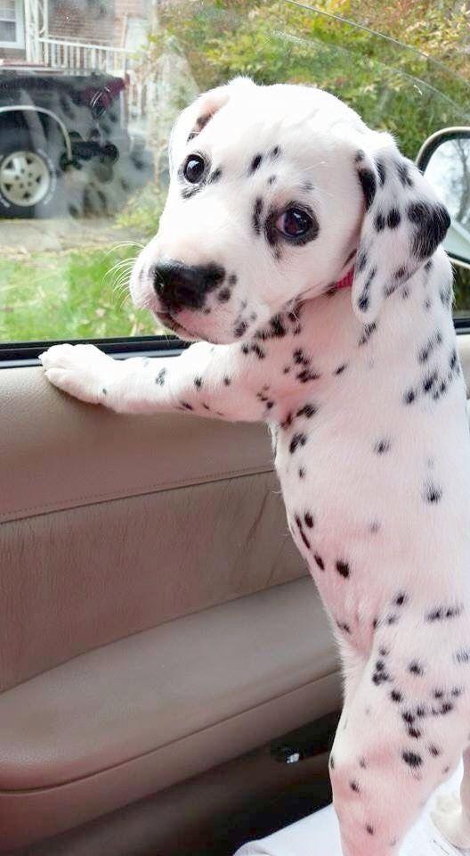 Cool Puppies For Sale Near Me Under 300 Xo Rozkosne Steniatka Zvieracie Mladatka Plemena Psov