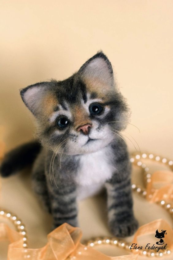 Beautiful grey and white fluffy kitten with cutest mustache playing serious.