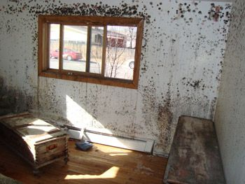 A mold infested room in a San Francisco house BEFORE Dryfast's mold removal procedures!