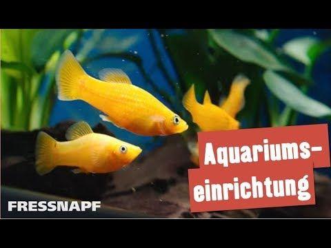 So Machen Sie Ihr Aquarium Startklar Dehner Aqua Start 80 Youtube Aquarium Einrichten Aquarium Aquarium Anfanger