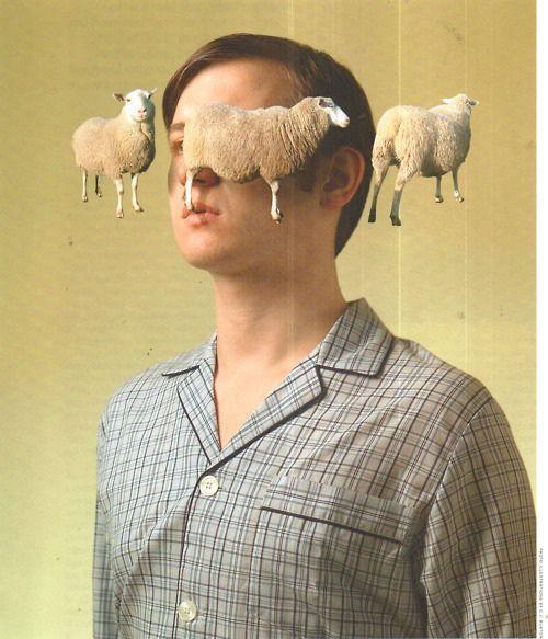 Time magazine, le compteur de moutons