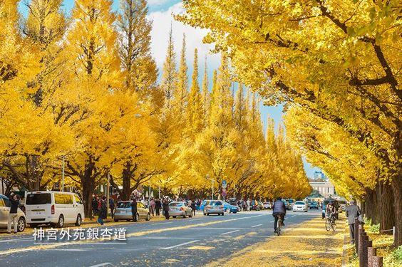 東京近郊的賞楓地點 | Popbee