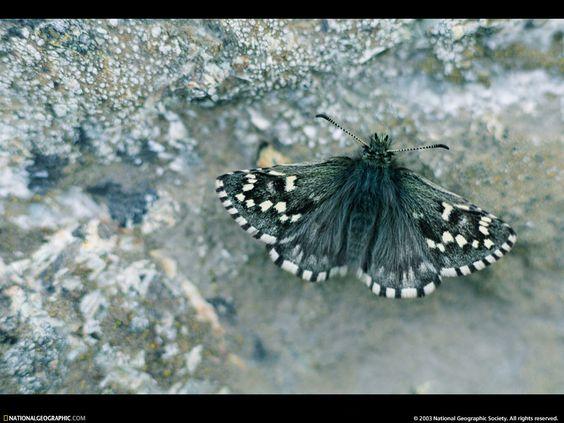 Animais selvagens - Papéis de Parede Grátis para PC: http://wallpapic-br.com/national-geographic-fotos/animais-selvagens/wallpaper-38110