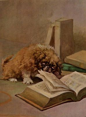 PEKINGESE PUPPY READING BOOK CHARMING LITTLE DOG PRINT
