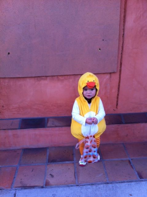 Maia, cutest duck in the world