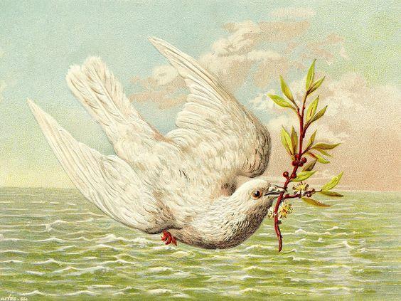 Скачать обои  праздники, поздравление с 8 марта, белый голубь 1280x1024: