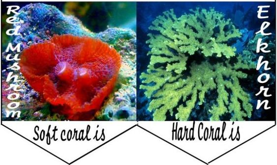 Hard and soft coral free minibook. Free Coral Reef Homeschool Unit Study, Lapbook and Hands-on Learning Activities and Ideas Click here to grab them!