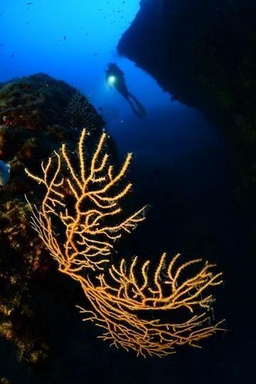 Forums plongée Plongeur  8 ème Concours de photo sous marine de Monaco
