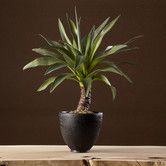 Found it at Wayfair - Sonoran Highlands Agave Plant in Bowl