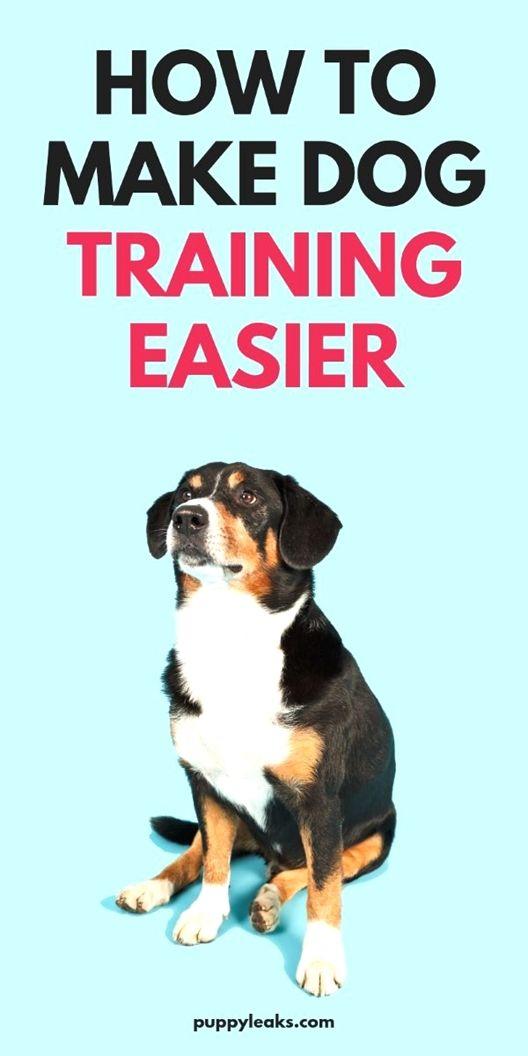Dog Training Camp Dog Training Roll Over Youtube Dog Training