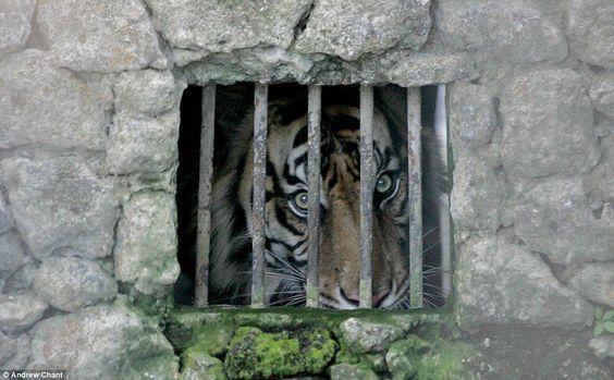 Seeking release