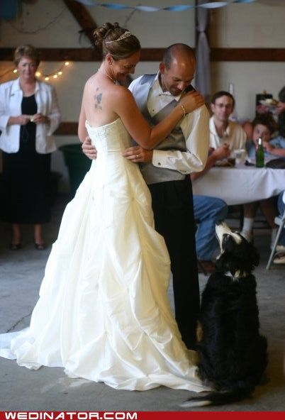 "Jealousy!  Kimberley says: ""My Border Collie, Brae, was very jealous that he wasn't included in the first dance."""