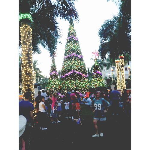 I love Christmas trees and this one was so big. ✿