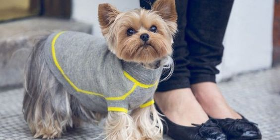 The Most Adorable Dogs In Sweaters, Because Now It's Fall|Glamour