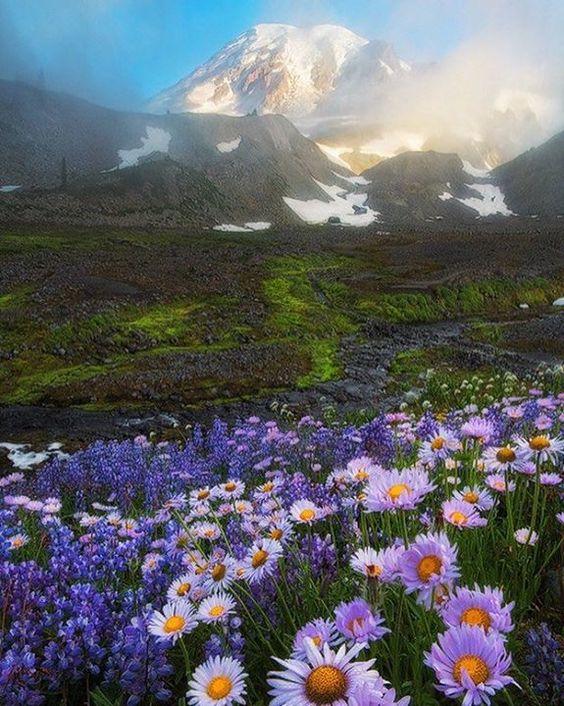 Hotels-live.com/cartes-virtuelles #MGWV #F4F #RT Mount Rainier Washington U.S. | Photography by  David Thompson (@davidthompsonphotography) #EarthOfficial by earthofficial https://www.instagram.com/p/BDjGQlwt0ZV/