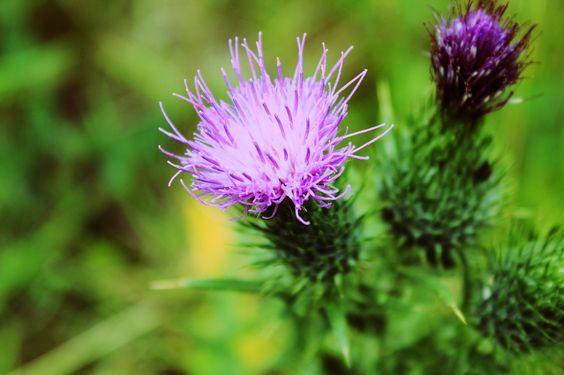 WILLIAM SHAKESPEARE'S WEEDING TIPS - http://www.gardenpicsandtips.com/william-shakespeares-weeding-tips/