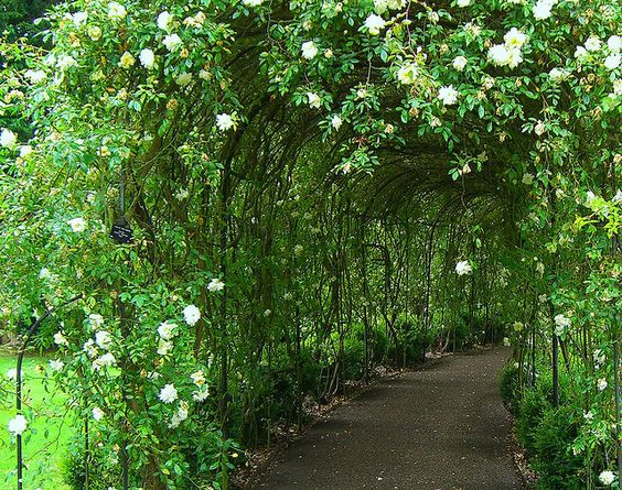 Warwick castle victorian rose garden a favorite place to for Gardening 4 you warwick