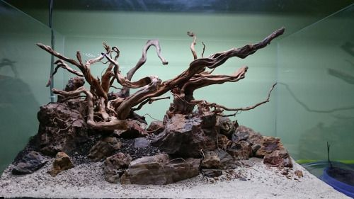 Beautiful aquarium design with driftwood and natural rock for Fish tank driftwood