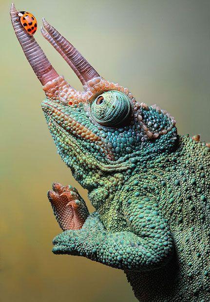 Beautiful.  Amazing bugs, reptiles and amphibians photographed by Igor Siwanowicz.