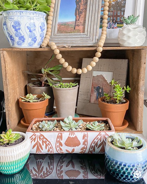 Succulents to add to your home decor. Succulent Pot | Succulent Planter | Cacti | Boho Style