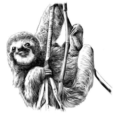 Sloth Hanging On The Branches Sketch Vector Sloth Drawing Sloth Art Sloth Tattoo