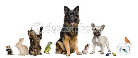Fotos dePet de stock, imágenes de Pet sin royalties | Depositphotos