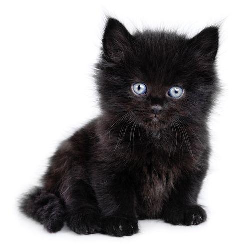 250 Black Cat Names Cool Creative And Unique Names For Black Cats Cat Names Cute Cat Names