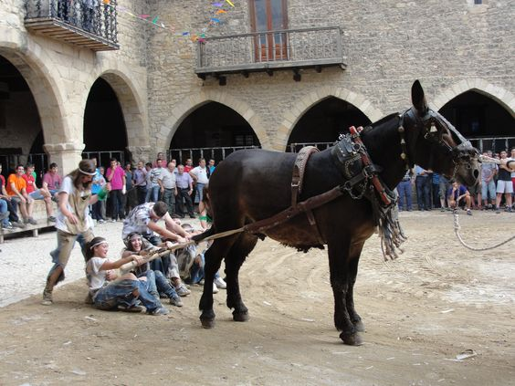Arrastre de quintos en la fiesta de San Lamberto en #cantavieja #maestrazgo