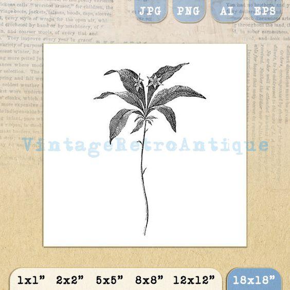 Digital Printable Wintergreen Star Flower by VintageRetroAntique