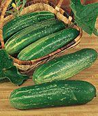 Straight Eight cucumber.
