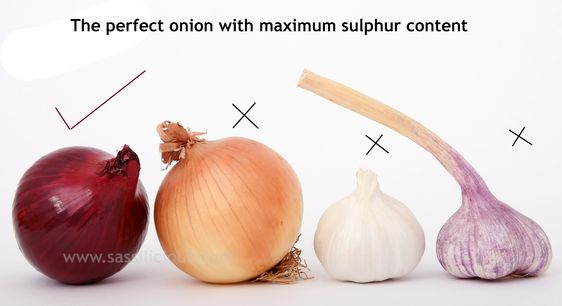 best Onion for hair growth