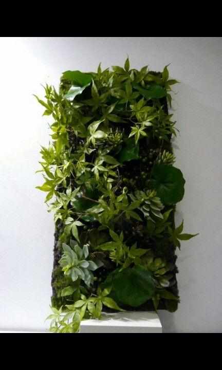 Cadre vegetal belle plante pinterest for Plante vegetal