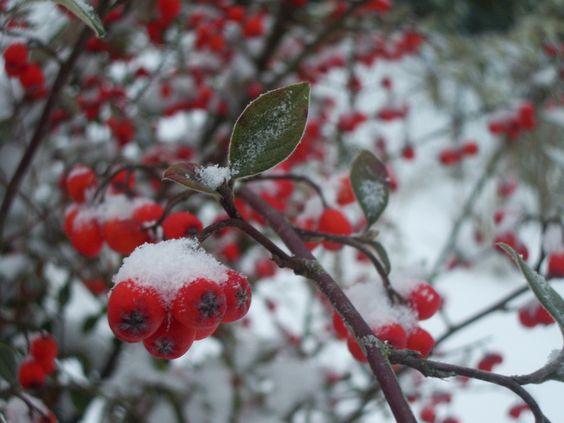 baies sous la neige