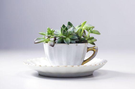 Arranjos produzidos a partir de peças de antiquário. A venda em www.haflora.com.br succulent / suculenta / cactus / cactos / plants / plant / plant / green /
