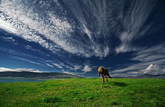 Beatiful! horse, angle, picture, sky....