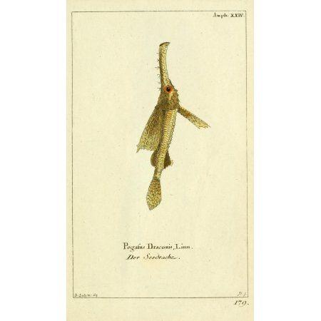 Naturgeschichte des Thierreichs 1780 Little Dragonfish Canvas Art - Daniel Sotzmann (24 x 36)