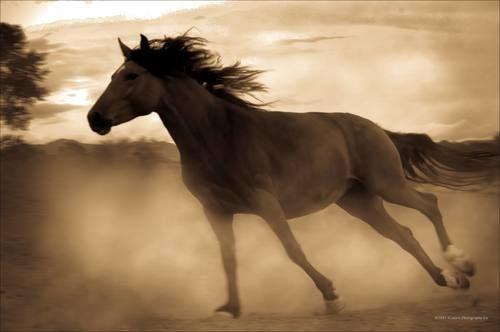 """""""Le cheval est pour l'homme comme les ailes pour l'oiseau.""""Proverbe turkmène"""