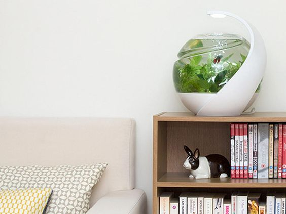 10 Pet-Friendly Products for Your Home | HGTV