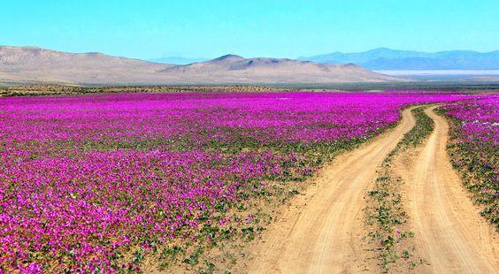 Desierto de Atacama Región de Antofagasta, Chile