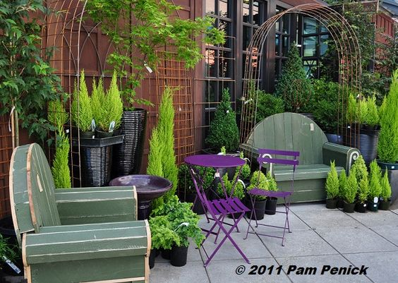 golden false cypress Arborvite with purple cafe table