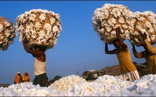 INNLIVE NEWS - INNLIVE MEDIA GROUP: The Huge Problem With Genetically Modified Cotton ...