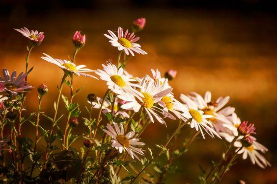 Flowerpower  # IN EXPLORE # IN EXPLORE # IN EXPLORE # IN EXPLORE #  Danke an alle Fotofreunde für das Interesse an diesem Foto!!!