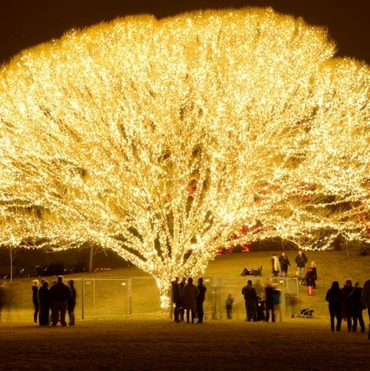 """How This Christmas """"Tree Of Life"""" Was Made & Where You Can"""