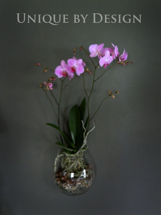Orchid in Roost Wall Terrarium from Aha! Modern Living.